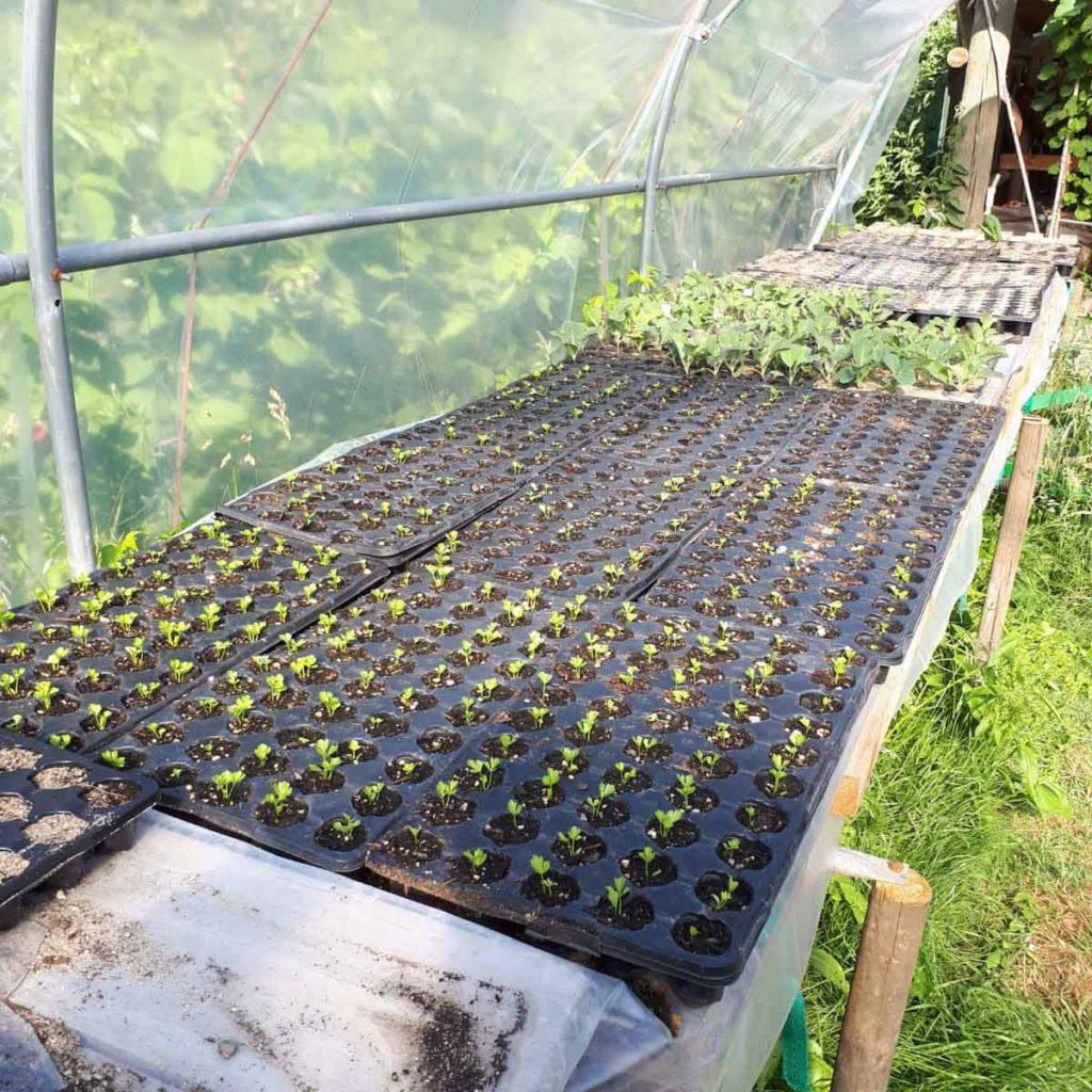 kleine Gemüsepflanzen